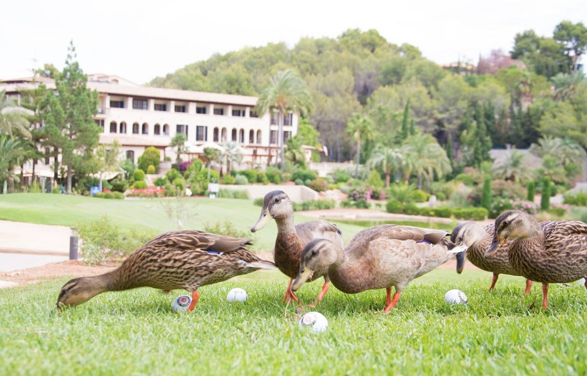 The curious characteristics of a golf resort